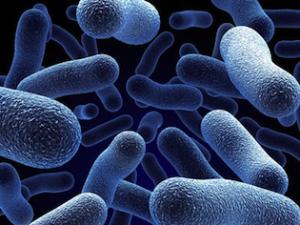 Evil bacteria plotting their evil plans